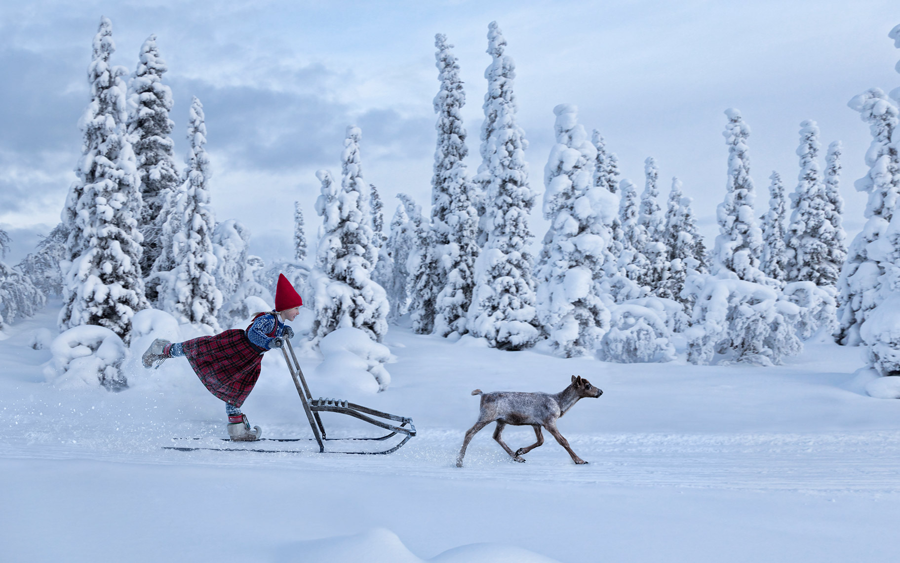 ANJA-AND-REINDEER-WITH-KICKSLED_THE-REINDEER-WISH