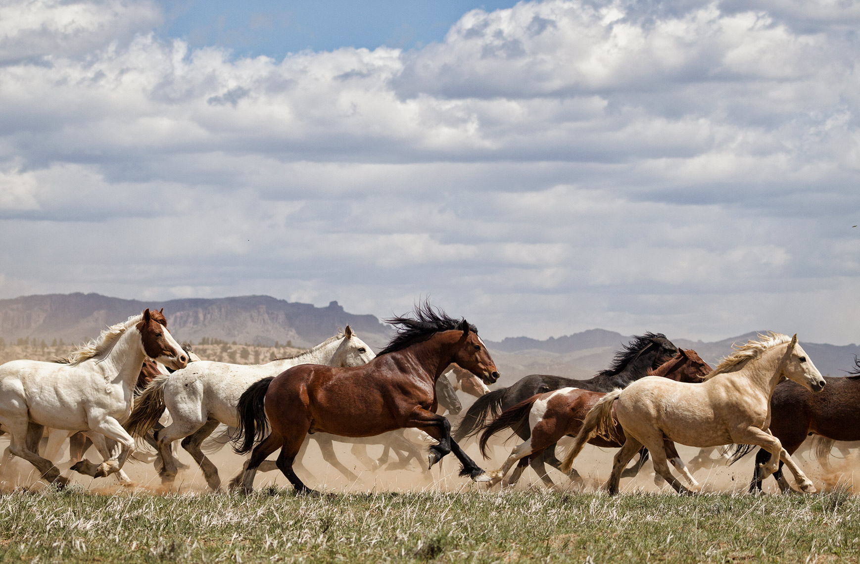 BRYCE-CANYON-HORSES