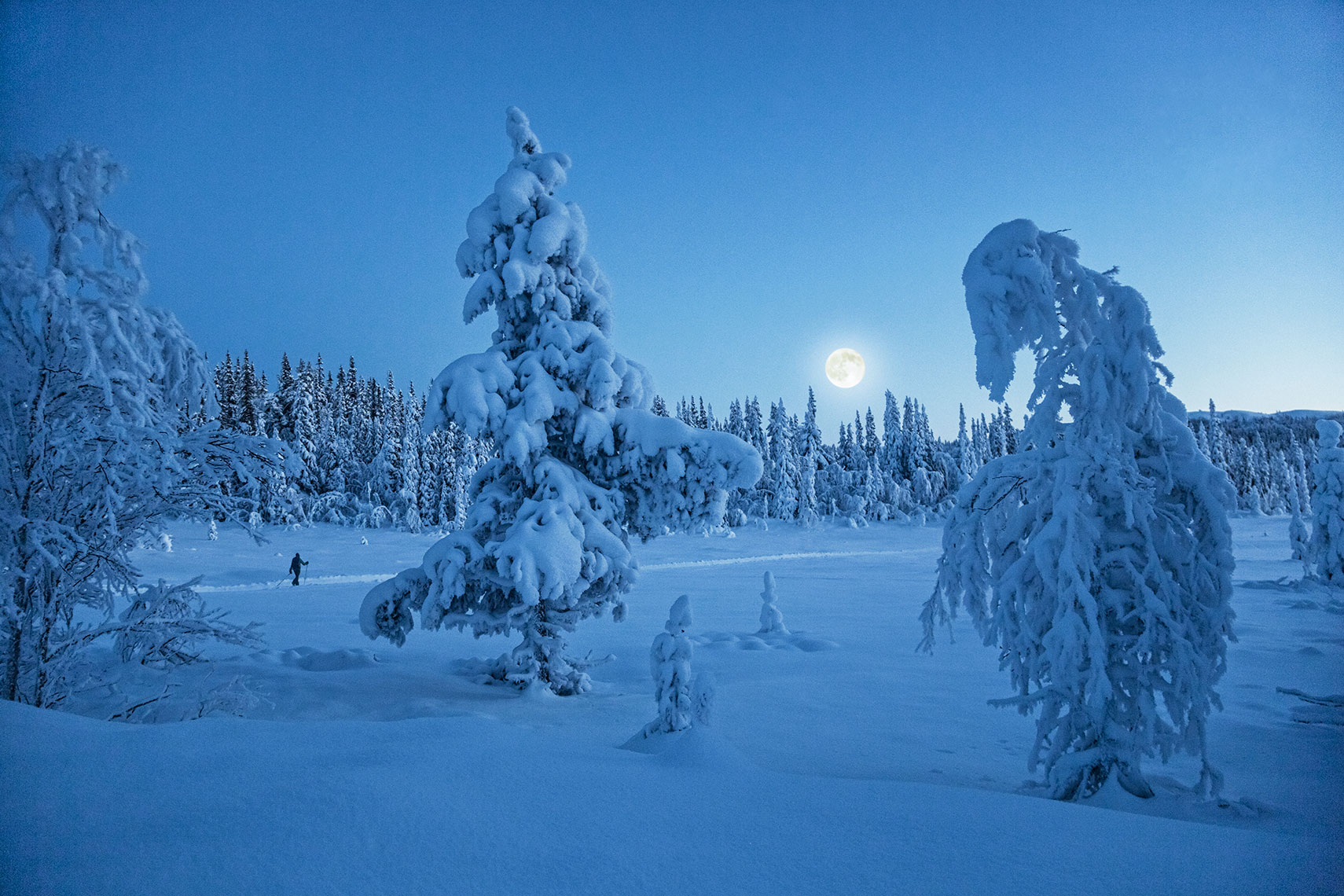 Cross-country-skiing-in-the-moonlight_2