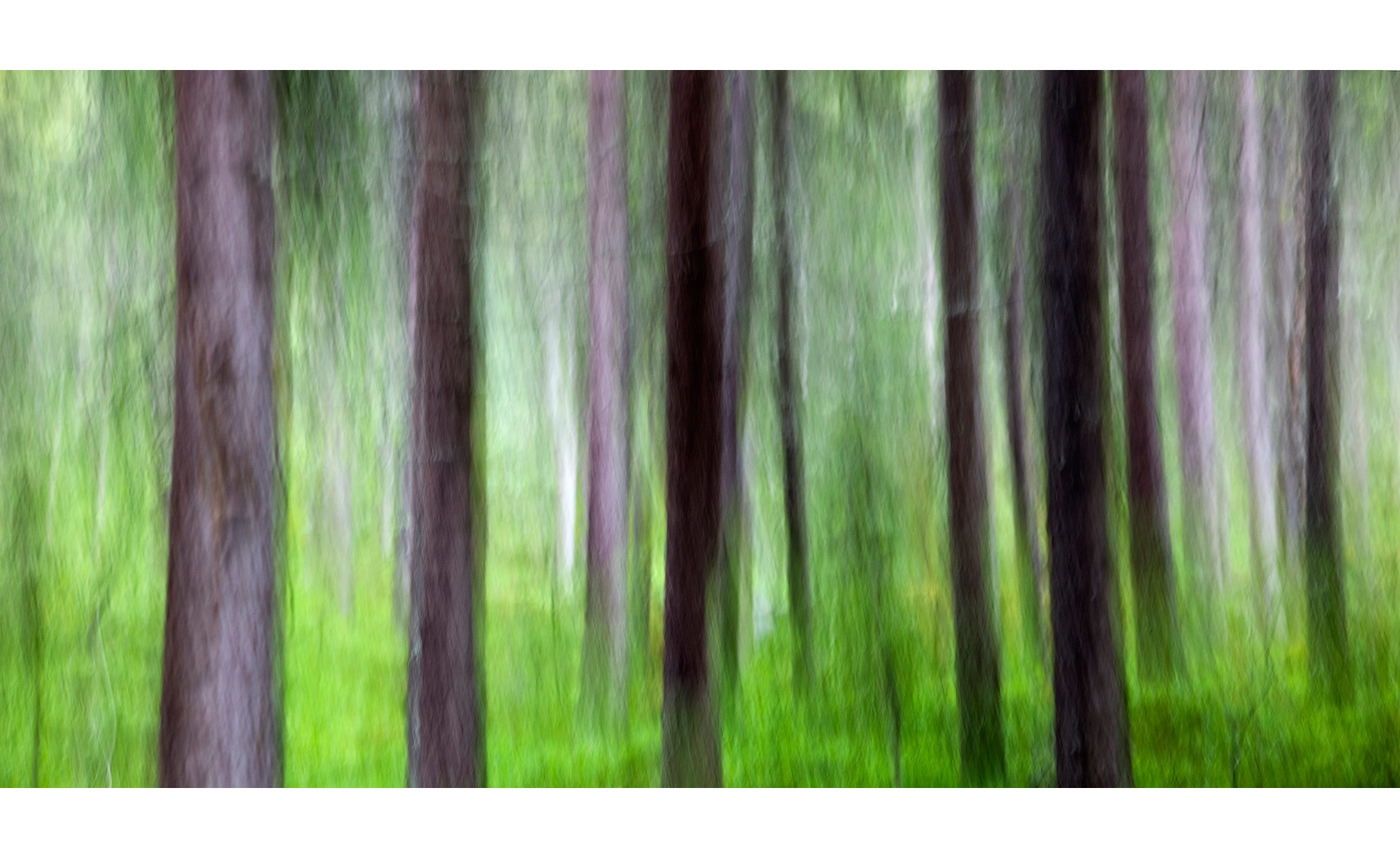 RAIN-IN-THE-FOREST