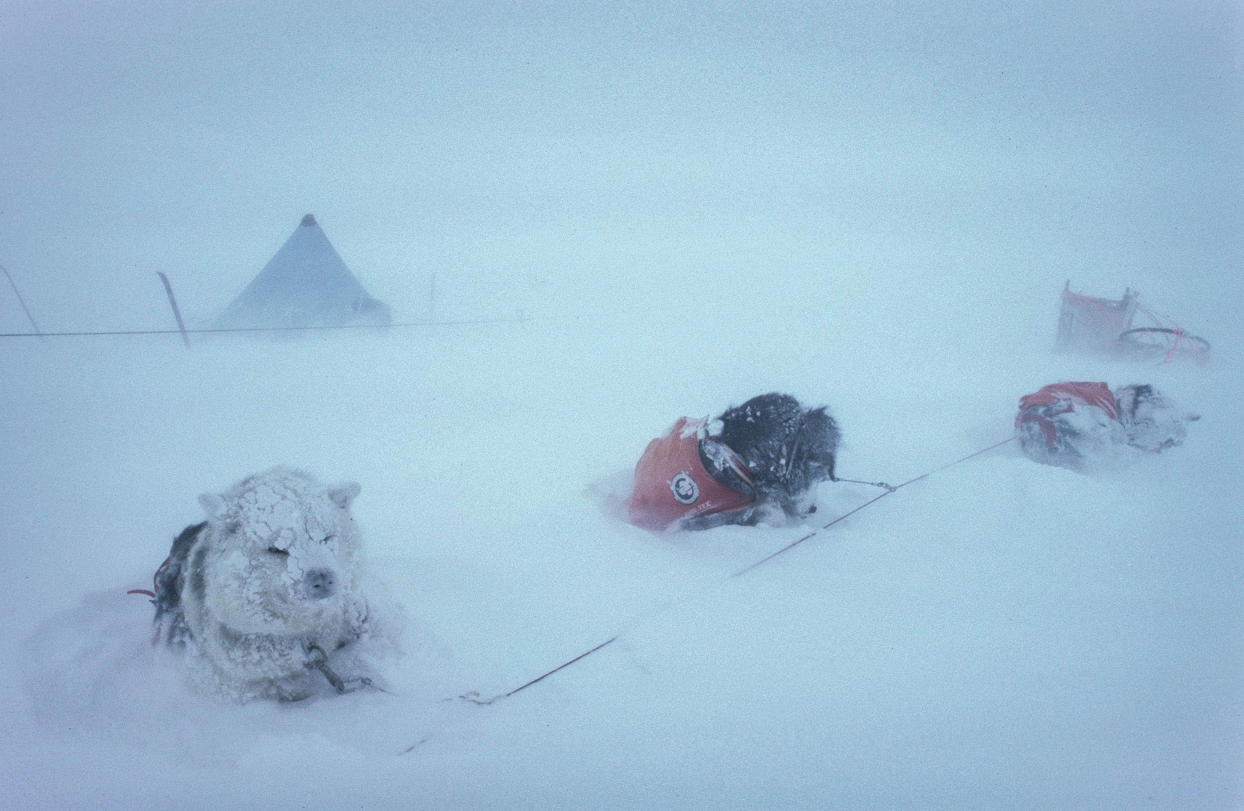 Trans-AntarcticaExpedition-Sled-dogs-in-Gore-Tex-jackets