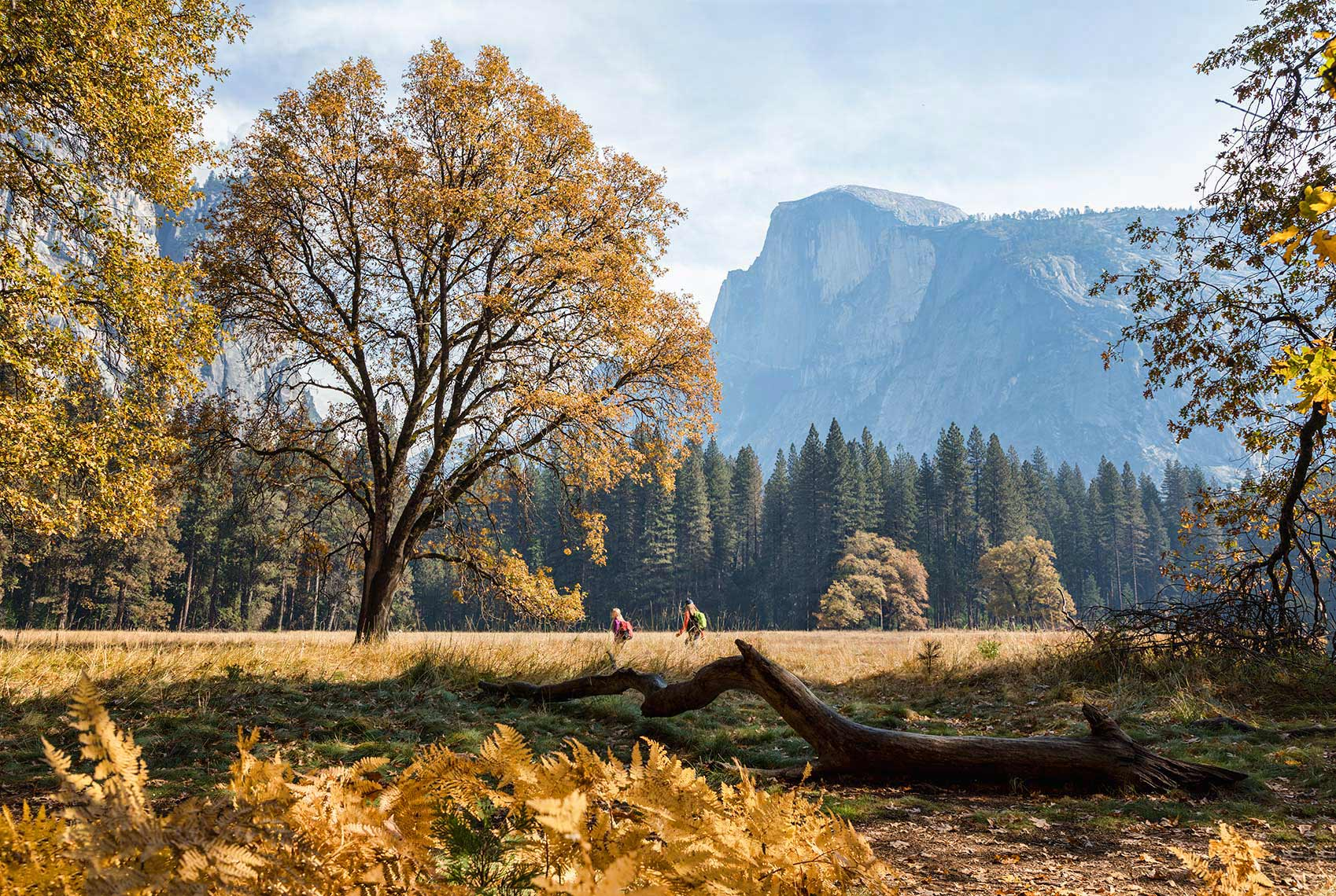 WALKING-TO-THE-BIG-TREE_YOSEMITE