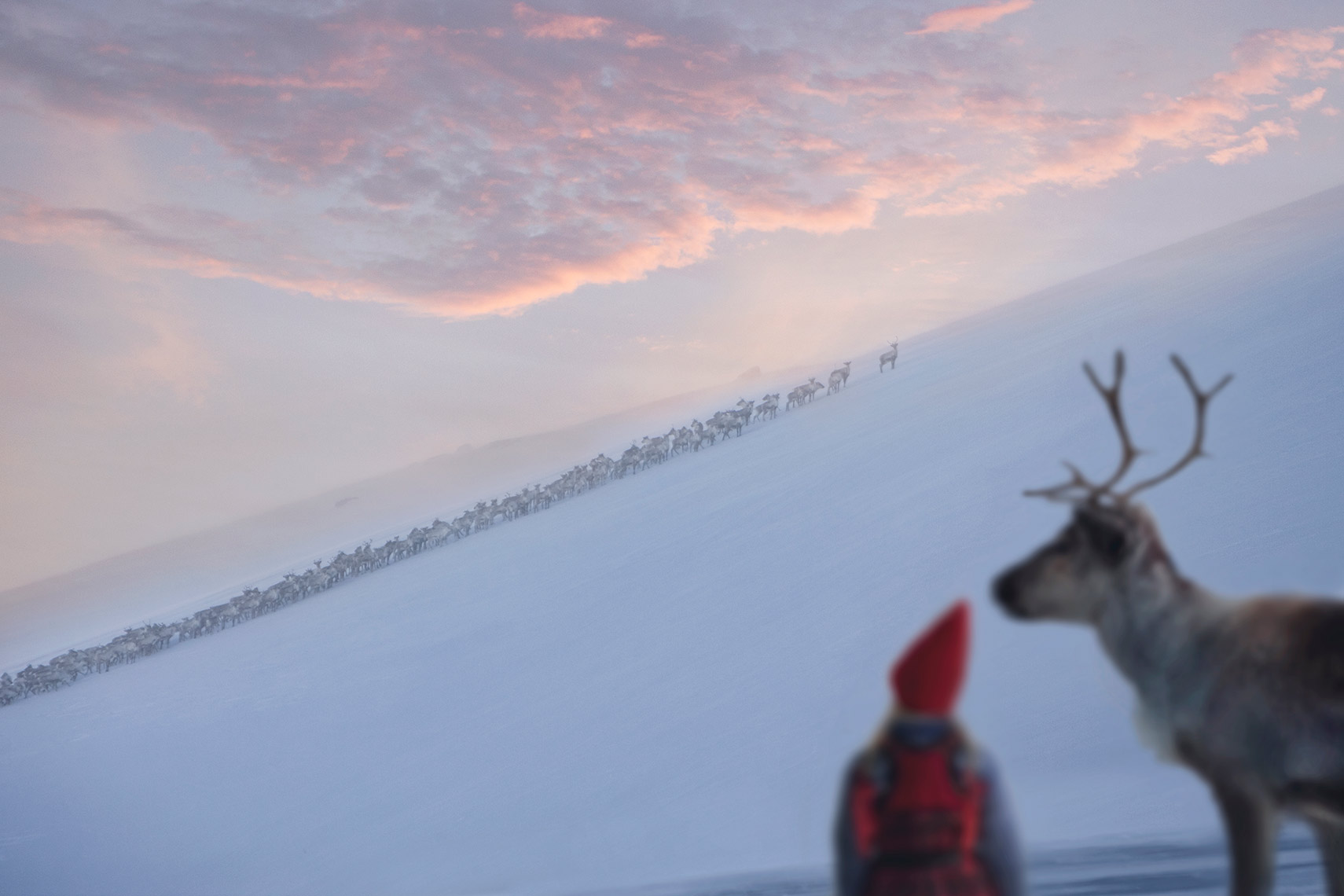 WATCHING-THE-REINDEER-HERD_THE-REINDEER-WISH