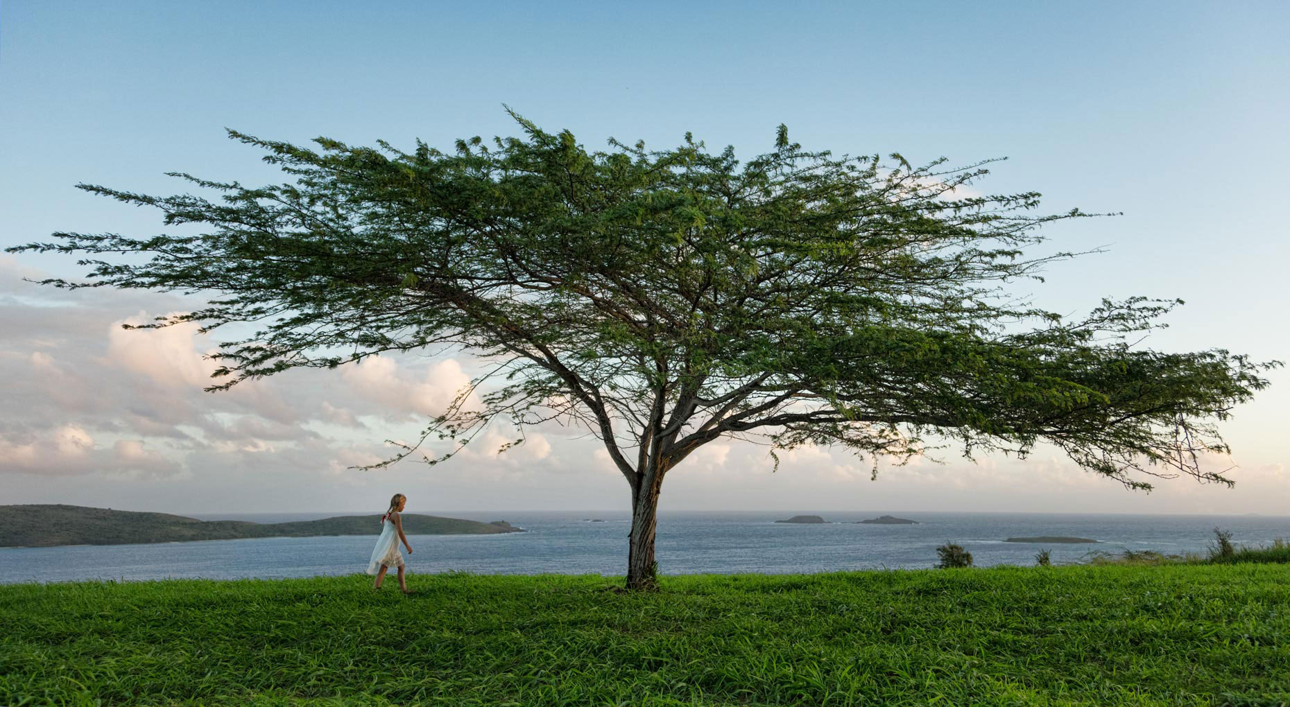 a-girl-and-a-lone-tree-above-the-ocean