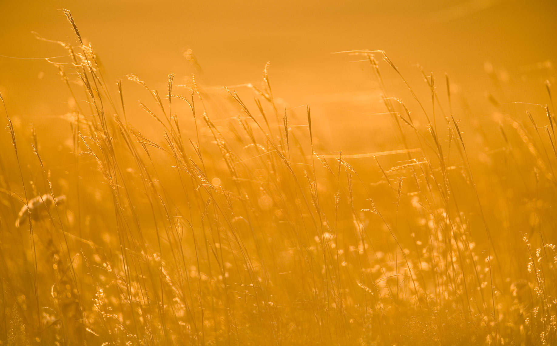 sunset-grass